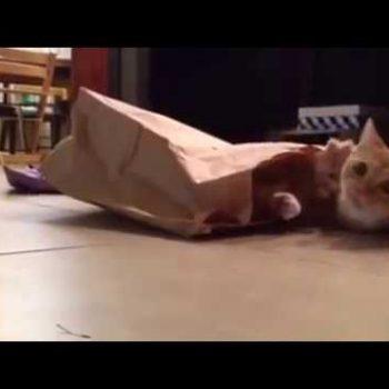 猫 スタイル 紙袋の再利用方