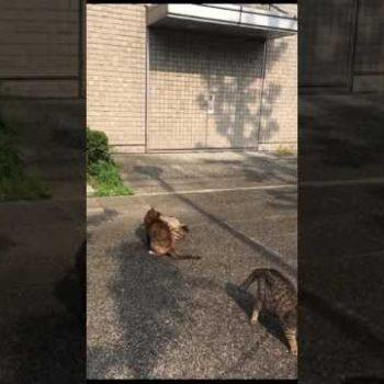 【どうぶつ基金】大阪商大のさくら猫ちゃんたち