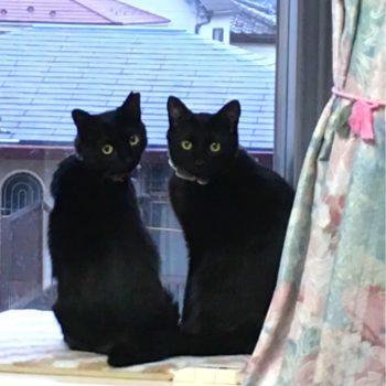 保護猫クロネコーズ