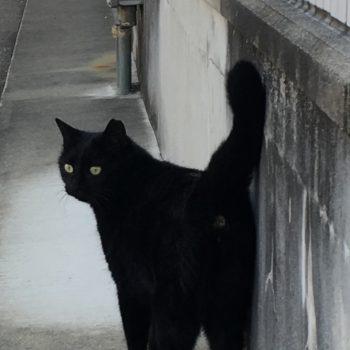 さくら猫『しーしー』