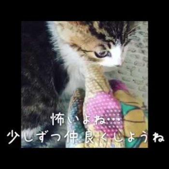 保護猫 大吉