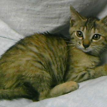 サビ仔猫(奇跡的な懐っこさ)