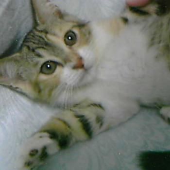 三毛仔猫(奇跡の懐っこさ)