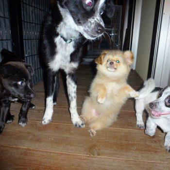 トット兄さんと仔犬たち