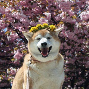 心にも「春」が来た