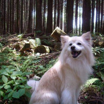 素晴らしき雑種犬、キキ。